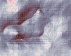 messe bologna